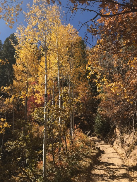 NK_aspens_maples_fall