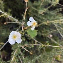 plants_whiteflowers