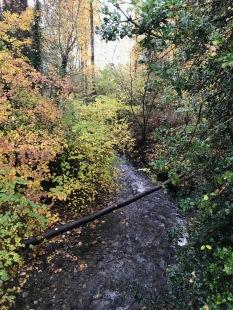 Road running: Swamp Creek