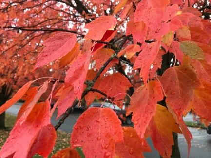 Road running: fall leaves along the Burke Gilman Trail
