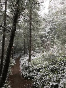 Fall snow on Tiger